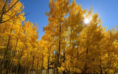 Top Spots Near Denver to Take in the Colorado Fall Colors