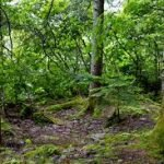 Appalachian Trail - Segment 12